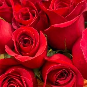 Red Roses-thumb