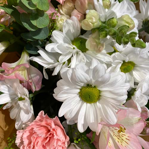 mixed bouquet of white daisy poms, pink carnations, pink alstroemerias, eucalyptus, and more.